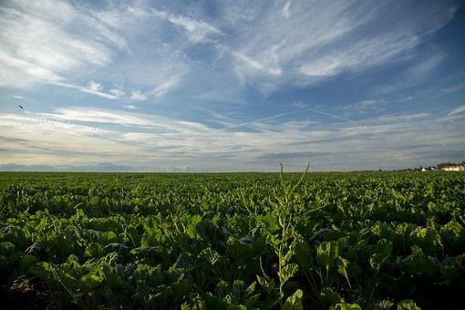 Green, Plant, Material, Vegetable Plot, Sky, Landscape