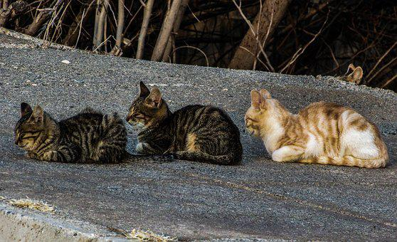 Cats, Stray, In A Row, Three, Cute, Group, Resting