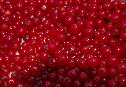 Red Currant, Currant, Natural, Healthy, Food, Garden