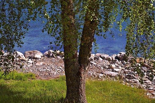 Tree, Deciduous Tree, Nature, Landscape, Summer, Green