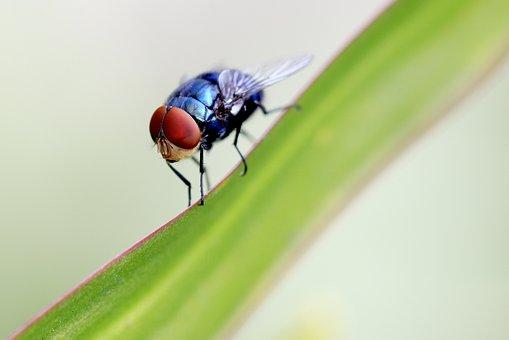 Fly, Summer, Outdoor, Closeup, Vibrant, Green, Spring