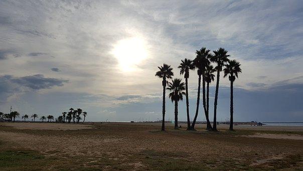 Beach, Palm Tree, Coma-rruga