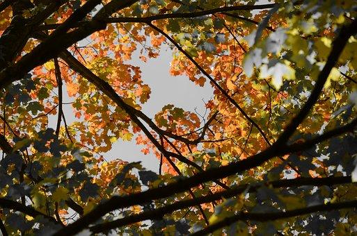 Fall, Tree, Lea, Autumn, Foliage, Autumn Leaves, Leaves