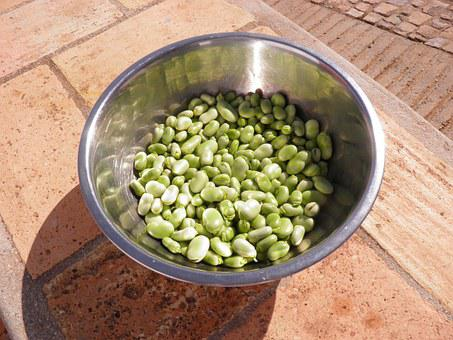 Broad Beans, Beans, Favas, Vegetable, Vegetarian, Green