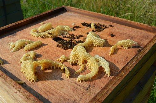 Bee, Honeybee, Beeswax, Honeycomb, Wax, Colony, Hive
