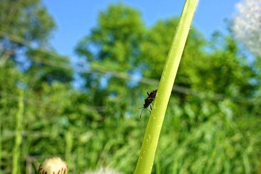 Insect, Animal, Hexapod, Invertebrates, Antennae