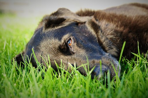 Dog, Grass, Rush, Dreamy, Concerns, Animal, Meadow