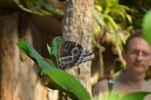 Butterfly, Botany, Animal, Animal World, Nature, Plant