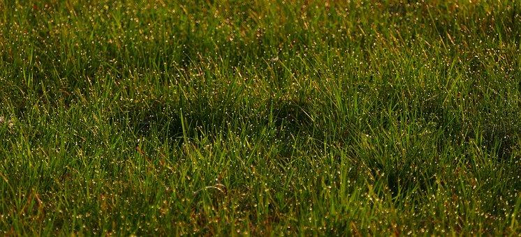 Landscape, Nature, Meadow, Dew, Drip, Grass