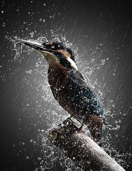 Bird, Rain, Storm, Effect, Manipulation, Nature