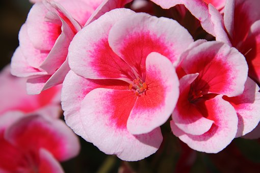 Flower Petals, Flower, Flowers, Color, Flower Bud
