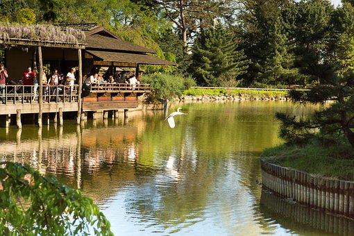 Park, Bird, Spring, Summer, Water, Nature, Lake, Duck