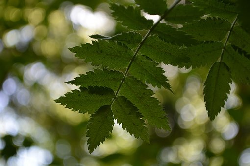 Leaves, Branch, Nature, Forest, Tree