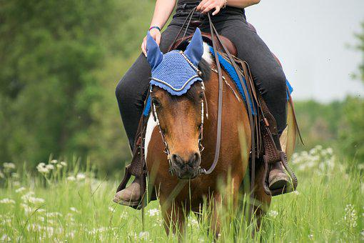 In The Free, Grass, Cavalry, Nature, Mammal, Human