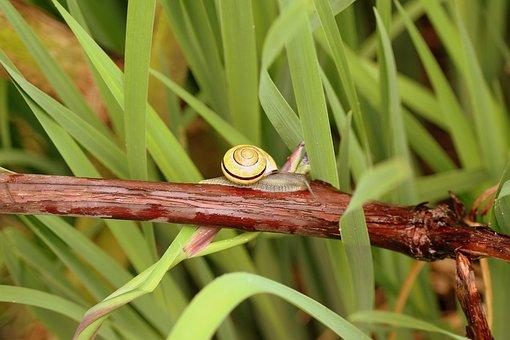 Snail, Shell, Seashell, Crawl, Molluscum