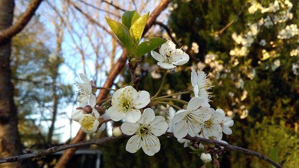 Spring, Macro, Nature, Branch, Flower, Kidney
