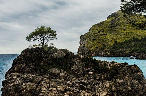 Tree, Island, Mallorca, Nature, Tropical, Landscape