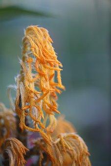 Flower, Petals, Orange, Yellow, Pollen, Rare, Nature