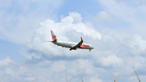 Airplane, Lion, Plane, Flight, Aviation, Transportation
