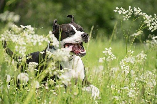Dog, Race, Tongue, Play, Animal, Nature, Meadow