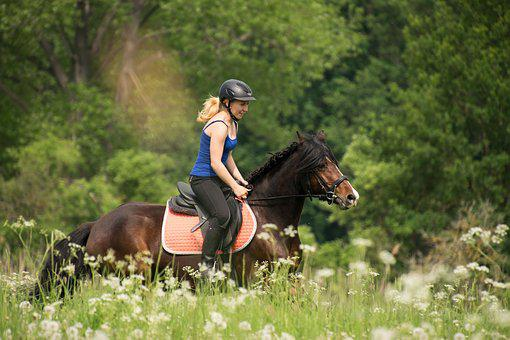 Reiter, Gallop, Horse, Horsewoman, Ride, Pony, Brown