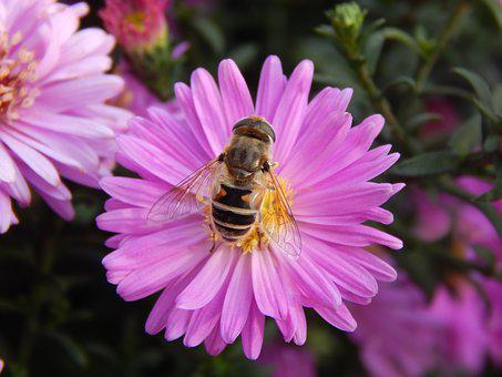 Bee, Pink Flower, Flower, Pollinate, Insect, Spring