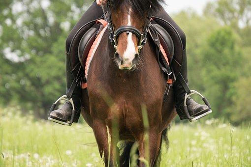 Ride, Horse, Stirrup, Horsewoman, Pony