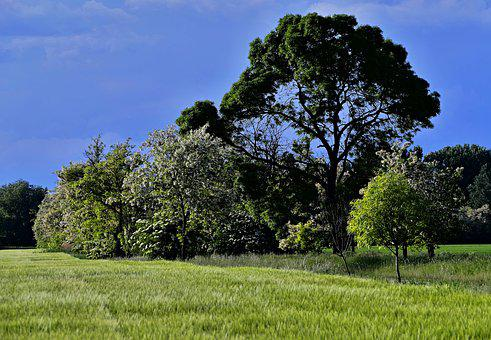 Tree, Flowering, Nature, Spring, Flowers, The Sky