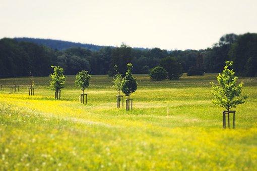 Landscape, Hiking, Nature, Trail, View, Forest, Idyllic