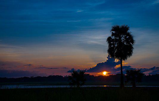 Landscape, Sunset, Evening, Tree, Blue, Sky, New