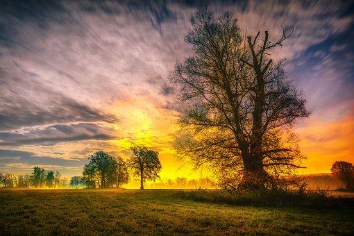 Sky, Tree, Wallpaper, Night, Nature, Landscape, Blue