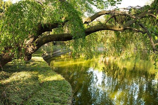 Park, Water, Nature, Tree, River, Reflection, Lake