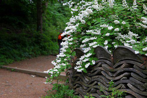 White Flowers, The Vine, Flowers, Wall, Wood, Plants