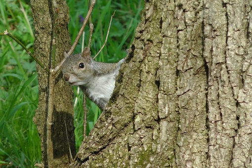 Squirrel, Tree, Trunk, Cute, Funny, Wildlife, Nature