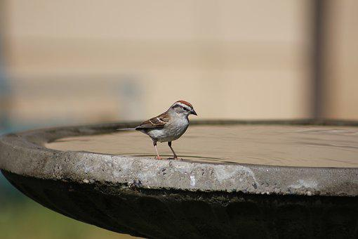 Birdbath, Bird, Nature, Wildlife, Water, Bath, Wild