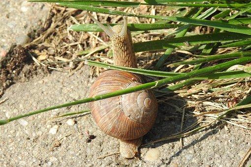 Snail, Winniczek, Crawl, Seashell, Nature