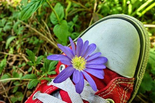 Wood Anemone, Anemone, Flower, Plant, Wildflower