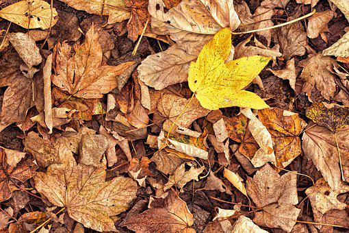 Leaves, Autumn, Withered, Yellow, Brown, Fall Foliage