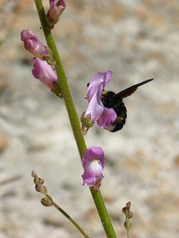 Bumblebee, Bumblebee Wood, Black Bumblebee