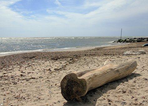 Beach, Driftwood, Nature, Tree, Ocean, Sea, Coast