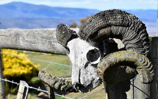 Farm, Skull, Ram, Wild, Bone, Rural, Animal, Ranch, Old