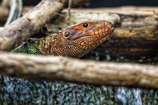 Zoo, Snake, Reptile, Animal, Head, Fauna, Nature