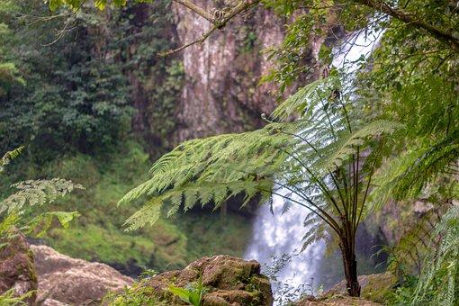 Forest Of Fog, Fern Arboreo, Fern, Cyatea, Biodiversity