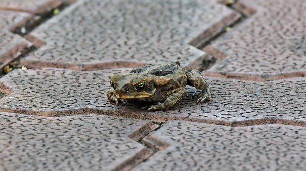 Frog, Animal, Wild, Wildlife, Natural, Nature