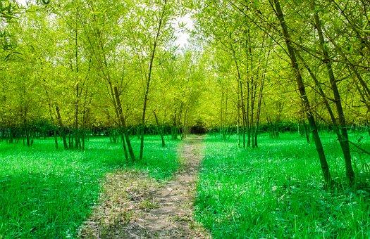 Bamboo, Garden, Road, Green, Trees