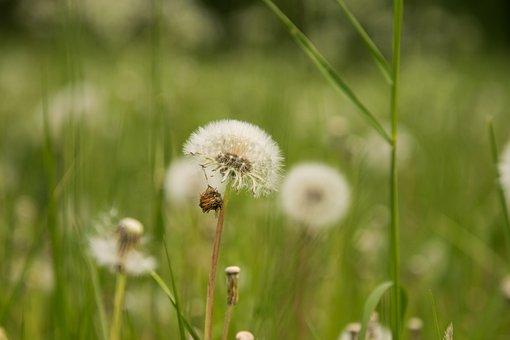 Grass, Nature, Summer, Growth, Field, Plant, Rural