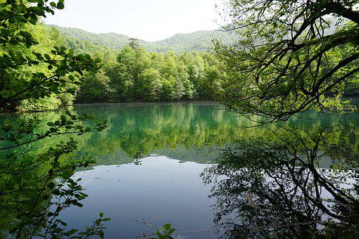 Lacquer, Lake, Green, Nature, Reflection, Tree