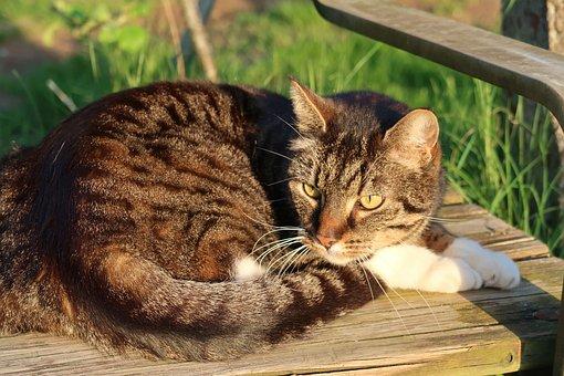 Cat, Mackerel, Domestic Cat, Doze, Rest