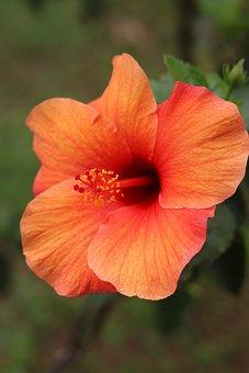 Flower, Nature, Tr, Flower Nature, Tropical, Garden