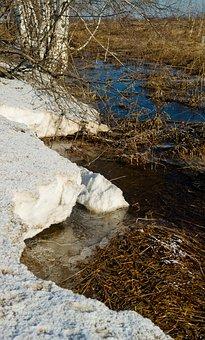 Nature, Landscape, Spring, Siberia, Tree, Park